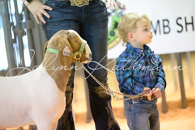 Future and 'Experienced' Lamb and Goat Showmanship