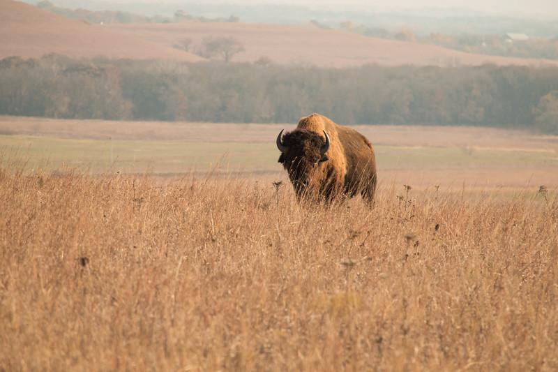 Kansas - Tallgrass Prairie National Preserve