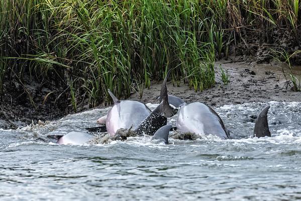Dolphins & Birds