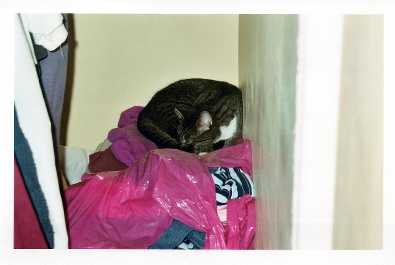 2005_Cats_0007_a.jpg