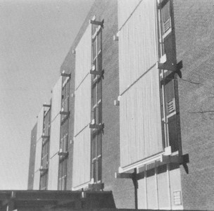 1972 Cypress Knee