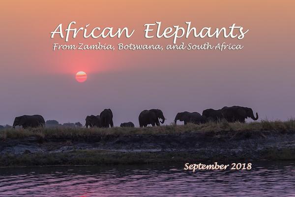 African Elephants 2018