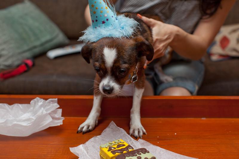 Dog-sushi-halloween2-17.jpg
