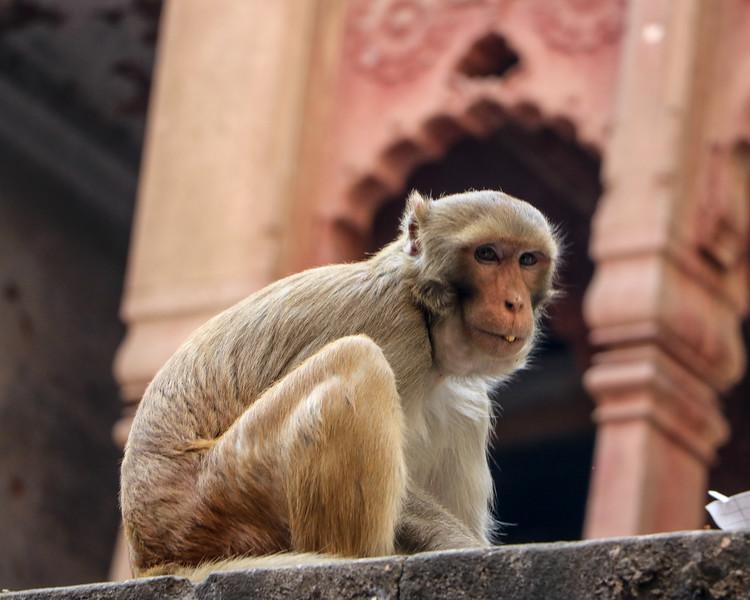 India-Varanasi-2019-1310.jpg
