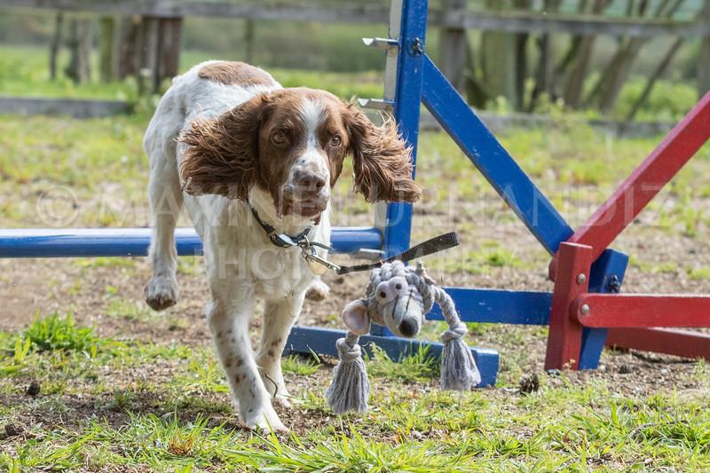 Dogs-7974.jpg