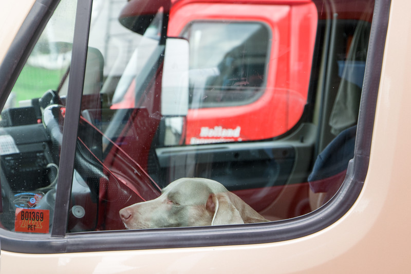 Truckers Dog Waiting