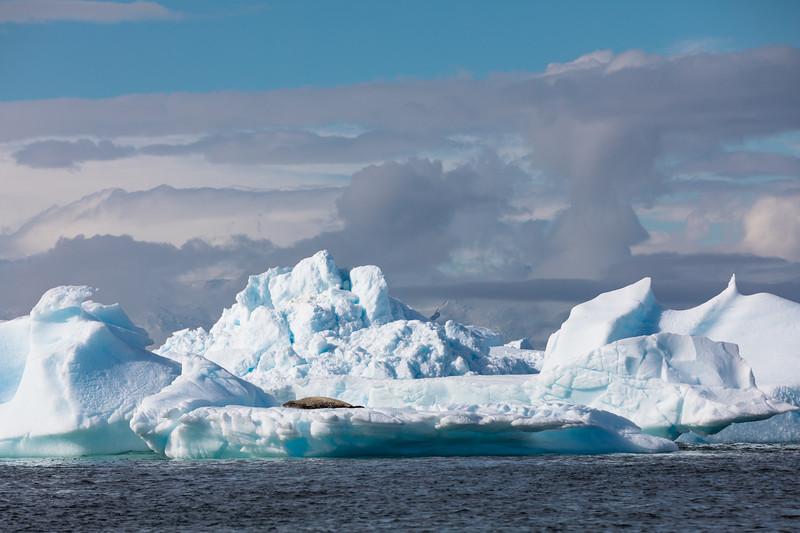 _MG_7403_20170122_Antarctica.jpg