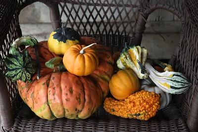 Harvest Farms and Corn Maze