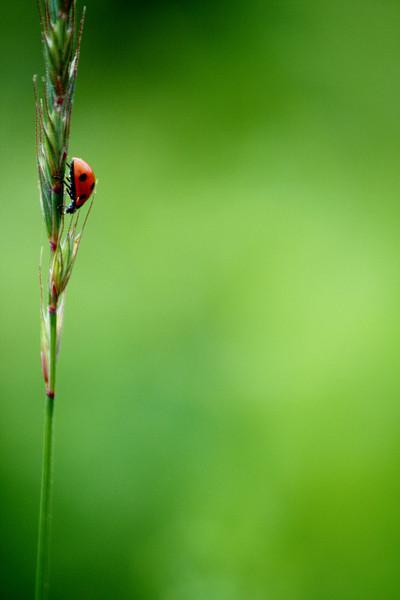 A Real Bug's Life