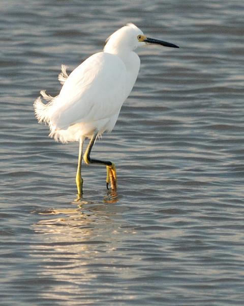 Goose Island 012009 143.jpg