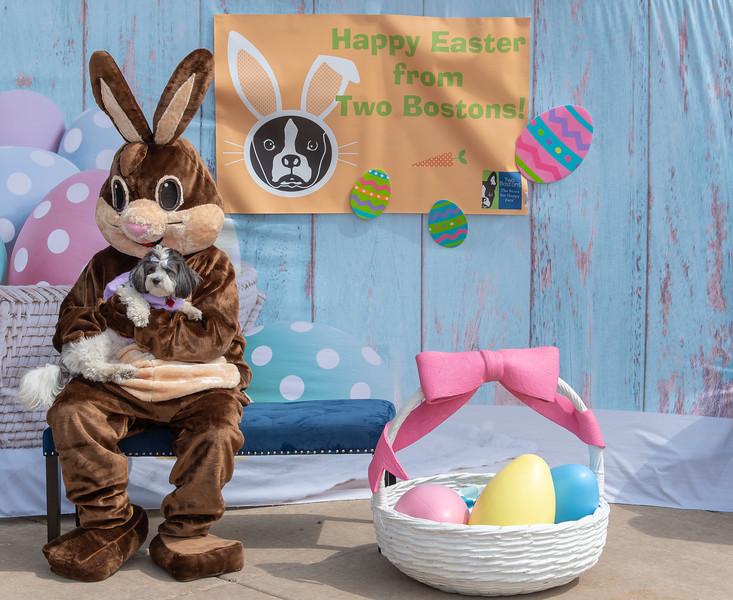 Easter2019TwoBostons-8254.jpg
