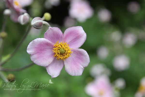 Lauritzen Gardens - Omaha Botanical Garden