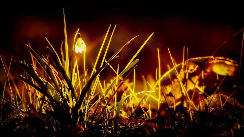 The Magic of Light-066.jpg