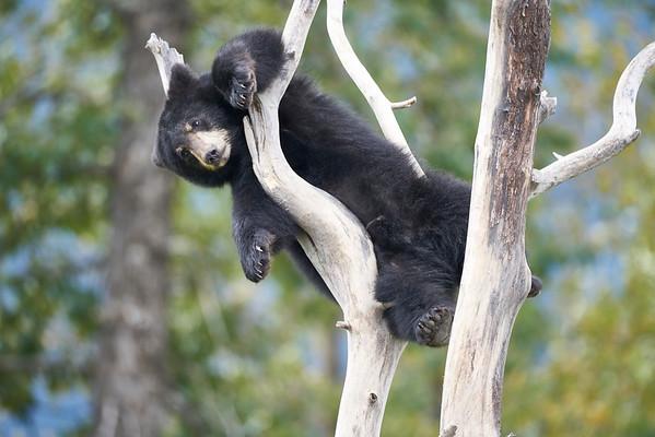Alaska 2016 Animals