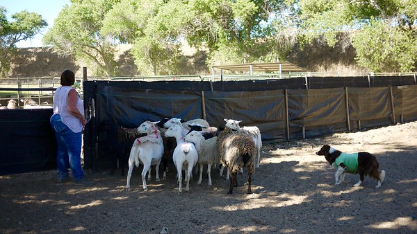 Herding camp June 2016