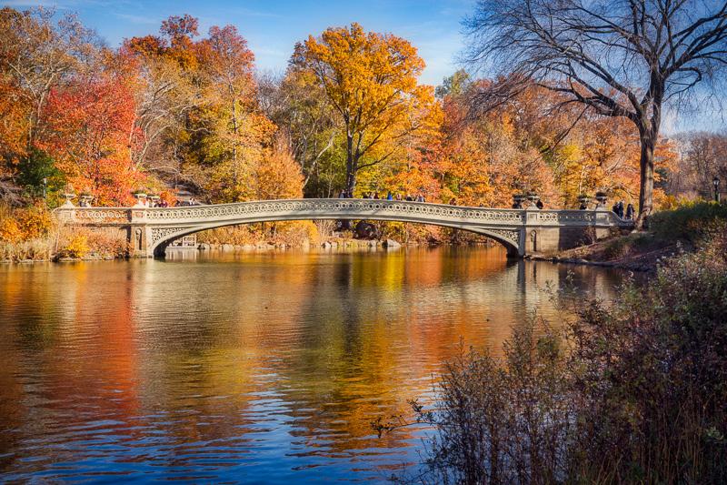 November 25 - Central Park, NYC.jpg