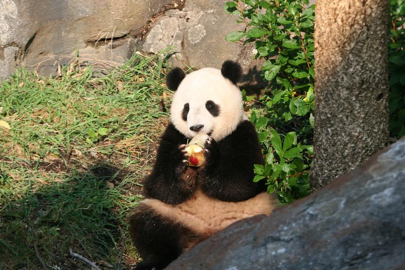 Panda072807_062.JPG