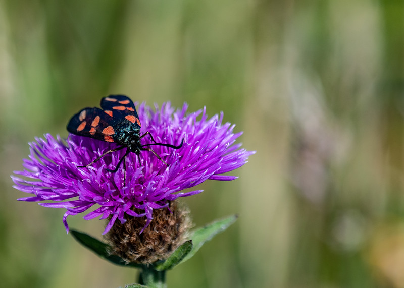 SWT_Seaford-Head-1579.jpg