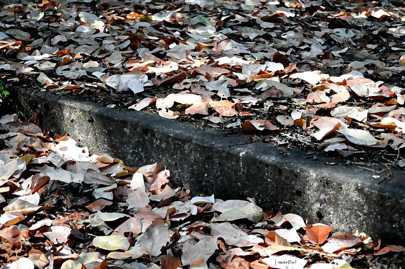 madrone leaves 9-15-2011.jpg
