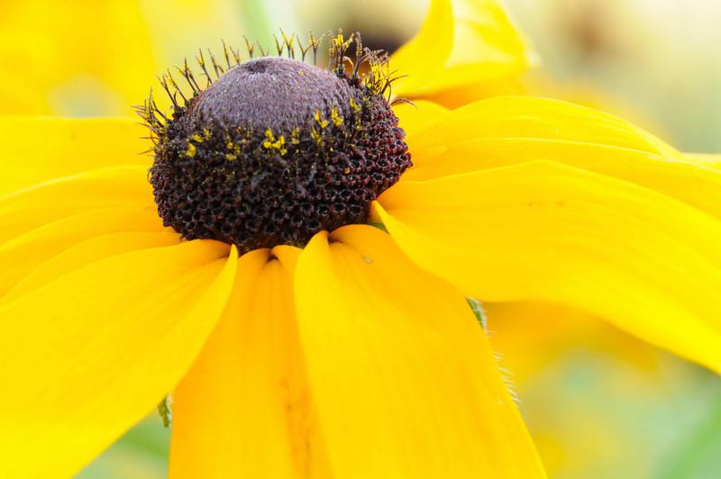 flowers_20080714-018.jpg