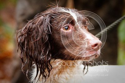 November 29th  Welsh Kennel Club AV Novice Spaniel Field Trial