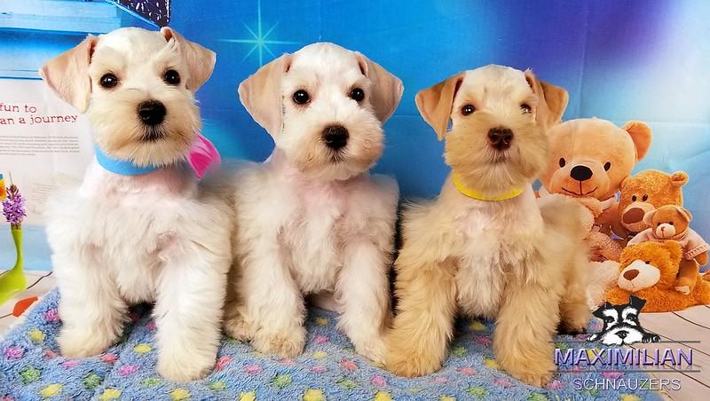 Jasmine Pups 016.jpg