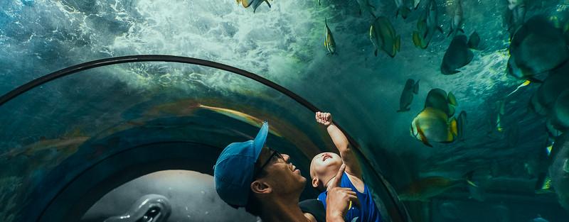 Aquarium - Vinpearl Land