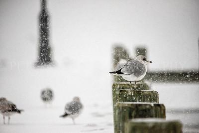 IH SNOW 2-21-15