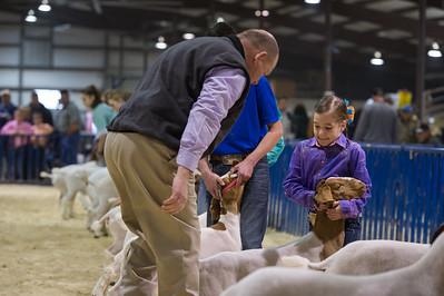 2015 Bexar County Livestock - Goats