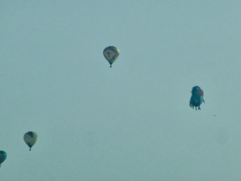 229 Michigan August 2013 - Hot Air Balloons.jpg