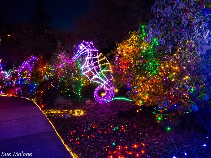 Lights in Brookings-24.jpg