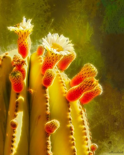 cactusworldcelestial-copy.jpg