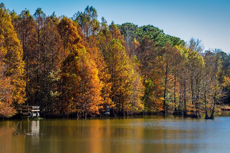 Louisiana Fall Colors