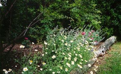 8 pretty-border-of-flowers.jpg