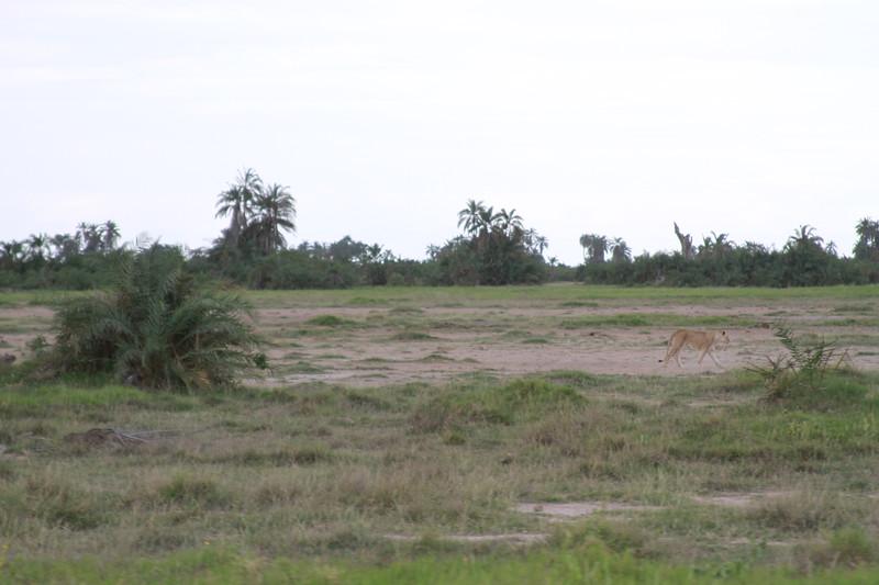 Kenya 2019 #2 1359.JPG