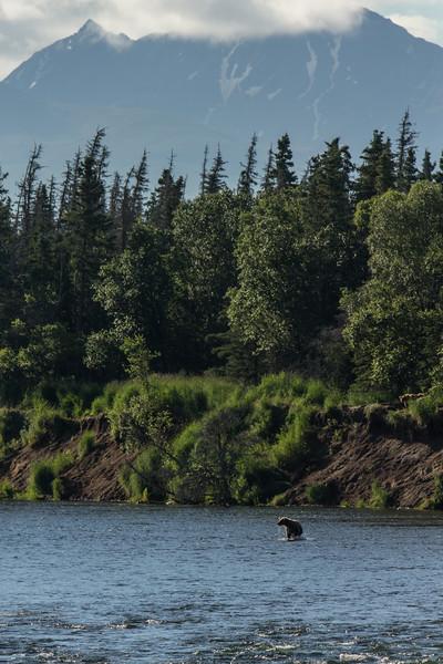 Katmai Bears-59.jpg