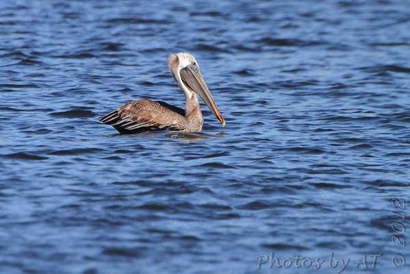 Birding 2012 September