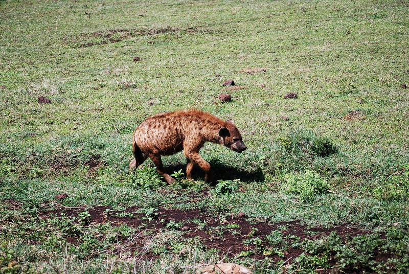Ngorongoro (172).JPG