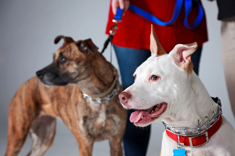 Picture Pawfect - 19 marca 2017 - 403-1.jpg