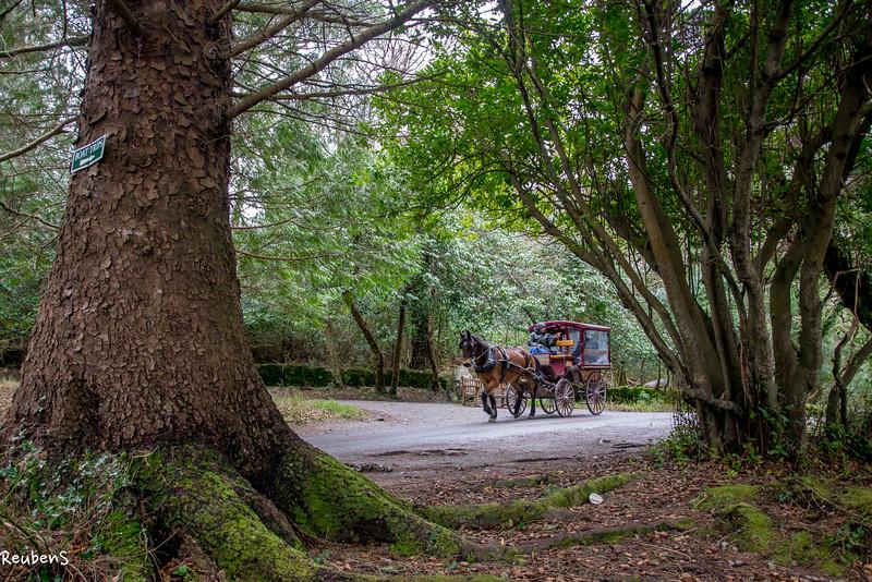 Horse carriage Killarney, Ireland.jpg