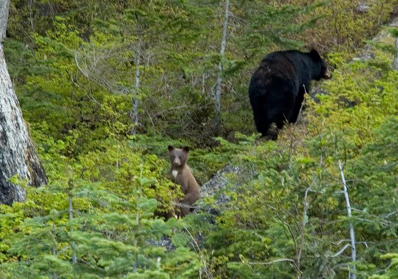 Bears_3.jpg