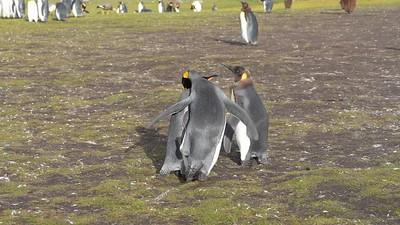 Falklands 2019