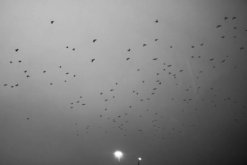 BirdFlock.jpg