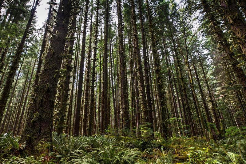 La Push Woods