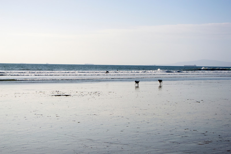dogs_beach-5.jpg
