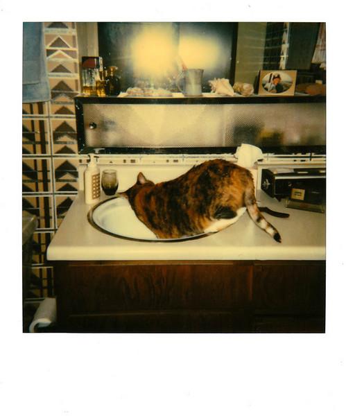 Polaroid_0066-XL.jpg