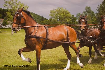 Eden Hill Pleasure Drving Show, Orleton Farm 6/16/07