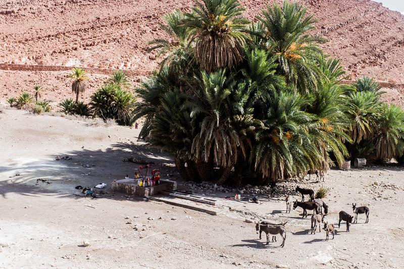 marroc2016tots-181.jpg