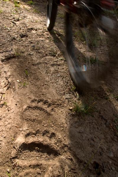 bear track-bike.jpg
