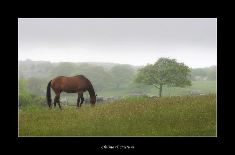 chilmark-pasture.jpg